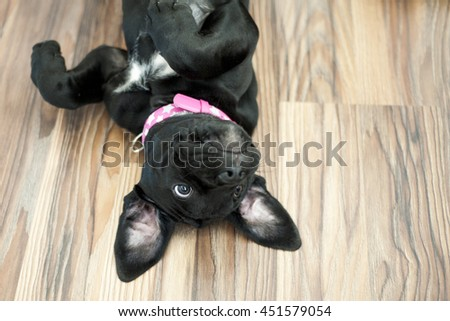 Puppy lying on the floor in funny poses