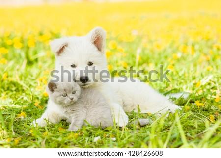 Puppy lying with kitten on a dandelion field - stock photo