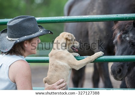 Puppy meeting a horse for the first time