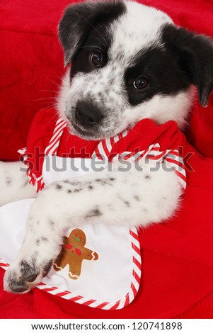Puppy on red Christmas colors