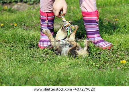 puppy play with colorful rope - stock photo