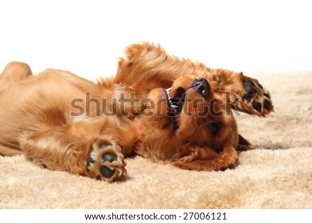 Puppy playing - stock photo