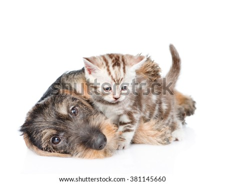 puppy playing with a kitten.  isolated on white background