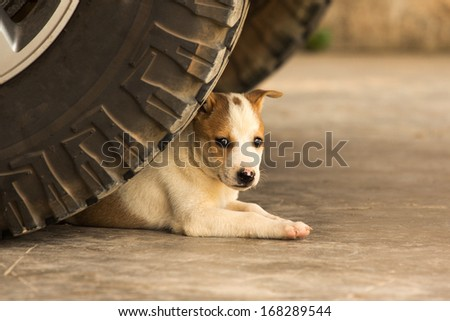 Puppy relaxing under car - stock photo