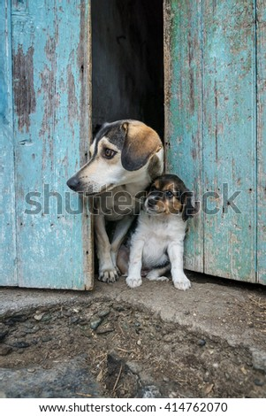 Puppy's Mother - stock photo