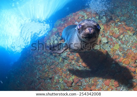 Puppy sea lion seal coming to you to have fun and play