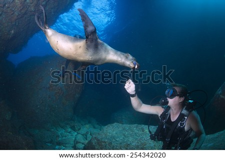 Puppy sea lion seal coming to you to have fun and play - stock photo