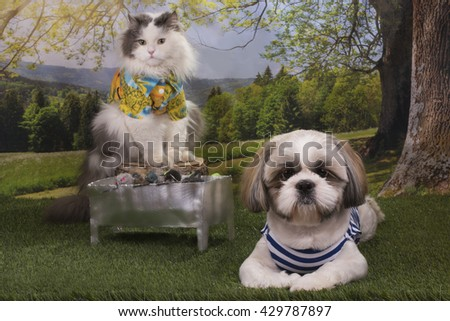 puppy shih tzu and a cat roast barbecue in the woods