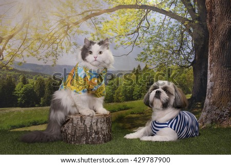 puppy shih tzu and a cat roast barbecue in the woods - stock photo