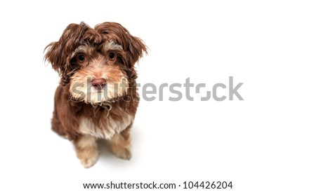 Puppy Sitting in front of white background