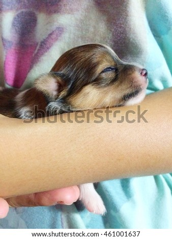Puppy sleep in our hug