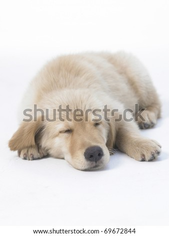puppy sleep on the white floor.