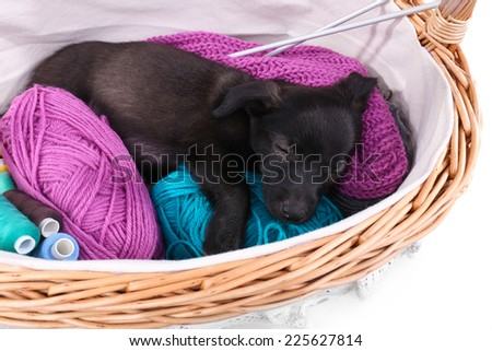 Puppy sleeping in a basket with yarn and thread isolated on white - stock photo