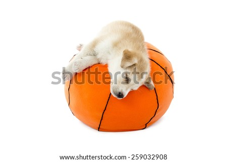 Puppy sleeping on a toy basketball ball against a white background - stock photo