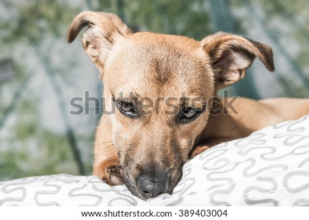 Puppy - small dog - playful pet - happy dog - stock photo
