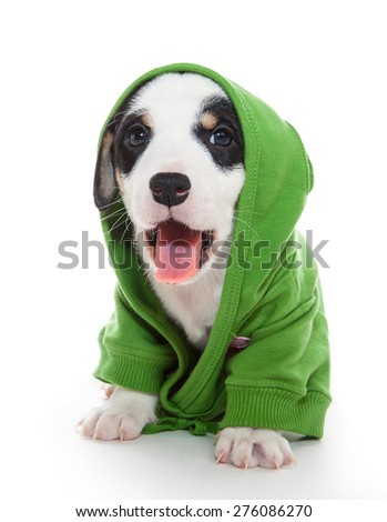 puppy T-shirt with pink tongue - stock photo