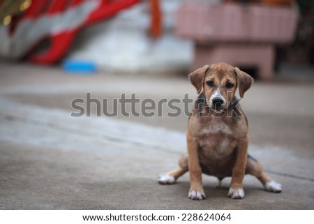 puppy urinating on the road - stock photo