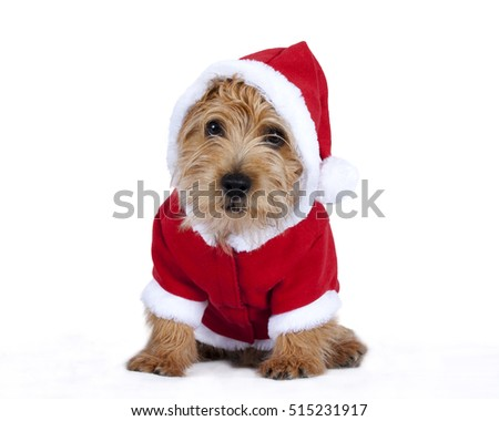 Puppy wearing a Christmas outfit