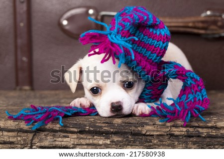 puppy wearing a knit hat - stock photo