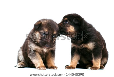 Puppy whispering to another puppy - stock photo