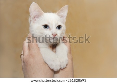 puppy white cat held in the hands
