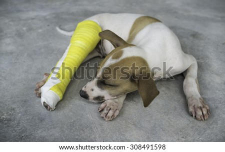 Puppy with a broken leg, splint - stock photo