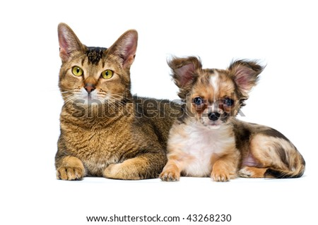 Puppy with a cat