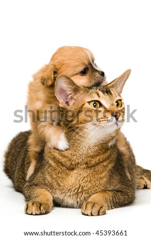 Puppy with a cat in studio