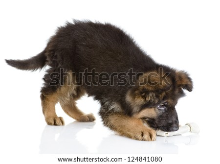 puppy with a dog bone. isolated on white background - stock photo
