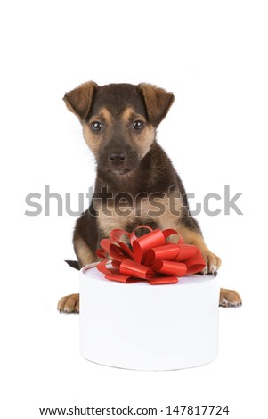 puppy with a gift on a white background - stock photo