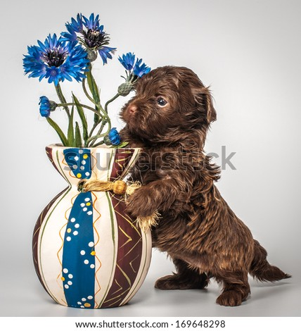 Puppy with a vase - stock photo
