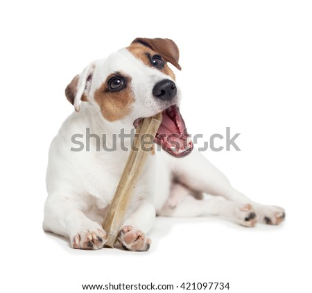 Puppy with bone. dog chewing on a bone