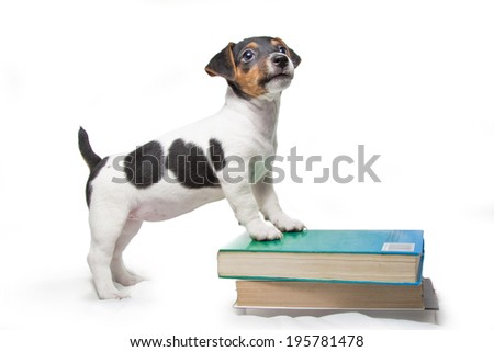 puppy with books - stock photo