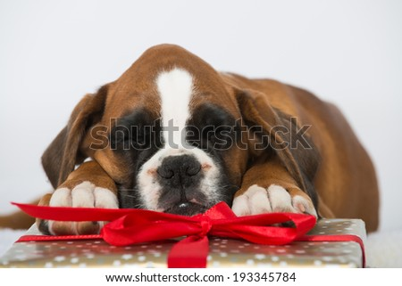 Puppy with christmas gifts isolated on white - stock photo