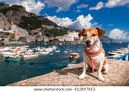 Puppy with fashion accessory scarf happily smiling sitting on a pier in the port of Amalfi coast Italy