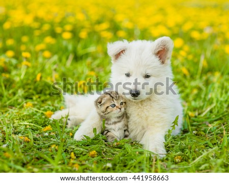 Puppy with playful kitten on a dandelion field