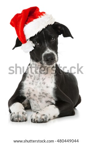 Puppy with santa claus hat
