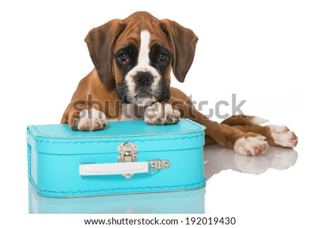 Puppy with suitcase isolated on white - stock photo