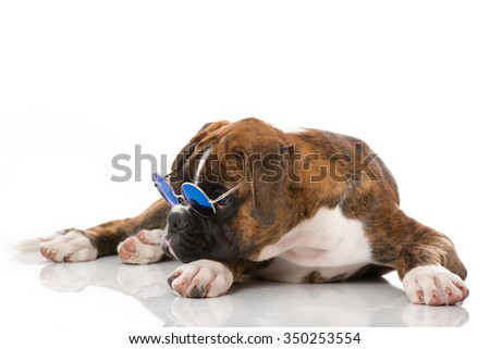 Puppy with sunglasses - stock photo