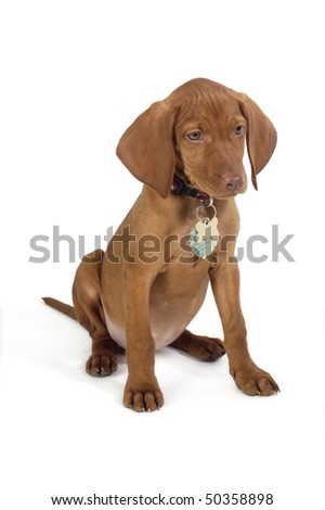 puppy with white background