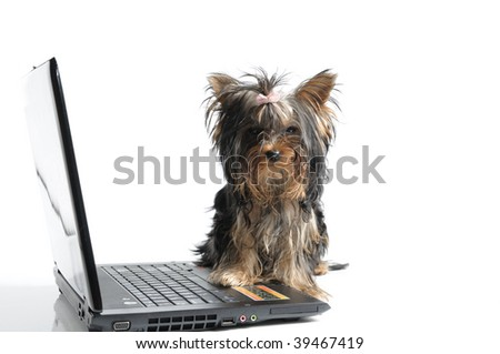 puppy yorkshire terrier and computer - stock photo