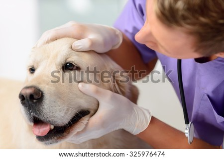 Pure animal. Professional young vet touching the dog and examining it while being involved in  work