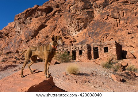 pure breed hunting dog standing on a rock in the valley of fire nevada - stock photo