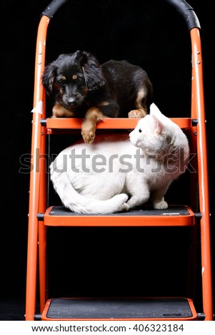 Pure white cat staring from below on a cute little puppy laying on a folding ladder - stock photo
