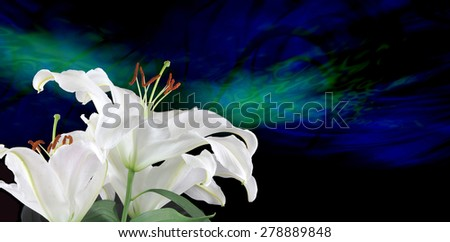 Pure White Lilies Traditional for Fertility  -  white lilies on left hand side with blue and green energy formation streaming across in background   - stock photo