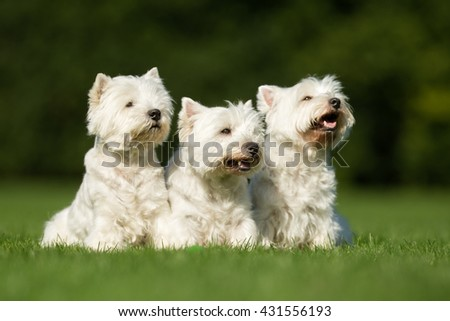 Purebred adult dogs outdoors in the nature on a sunny day during late spring and early summer.