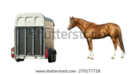 Purebred chestnut stallion and trailer isolated over a white - stock photo