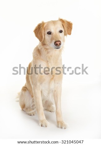 Purebred dog isolated on white background in studio.