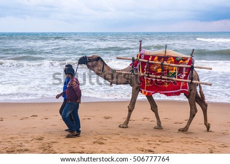 PURI - SEPTEMBER 24: A man walks his decorated camel looking for tourists on the sea beach on September 24, 2016 at Puri, Odisha, India. Camel ride on the beach is a popular tourist activity at Puri.