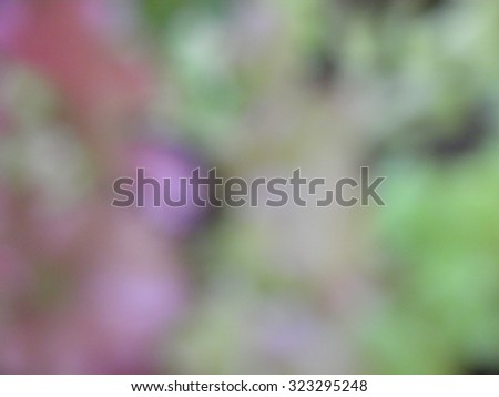 purple and green blurred background  - stock photo